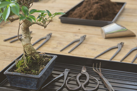 Taller de cuidados para bonsáis