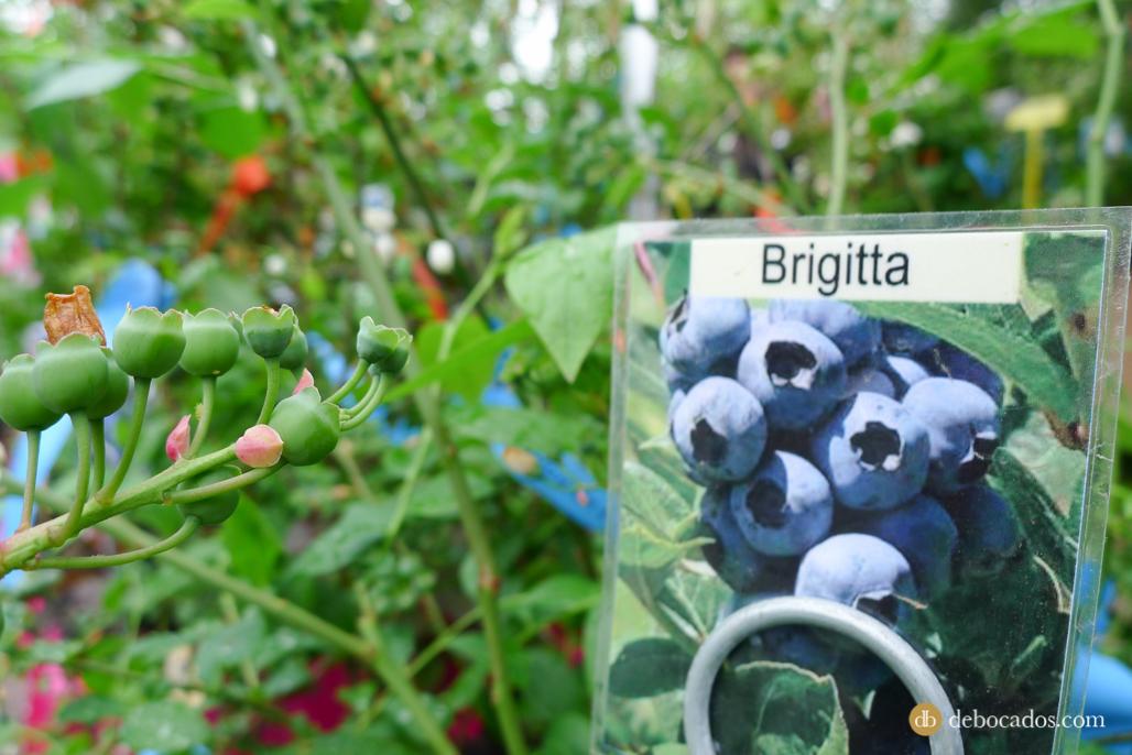 Brigitta en la Feria de Plantas de Colección en Iturraran