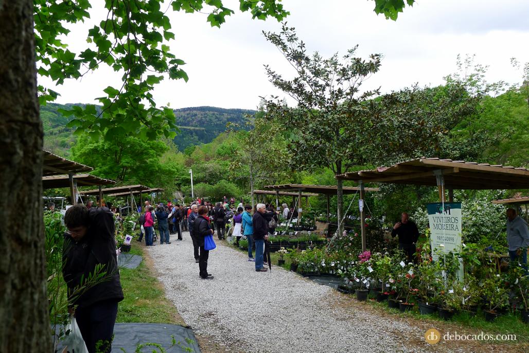 Feria de Plantas de Colección en Iturraran