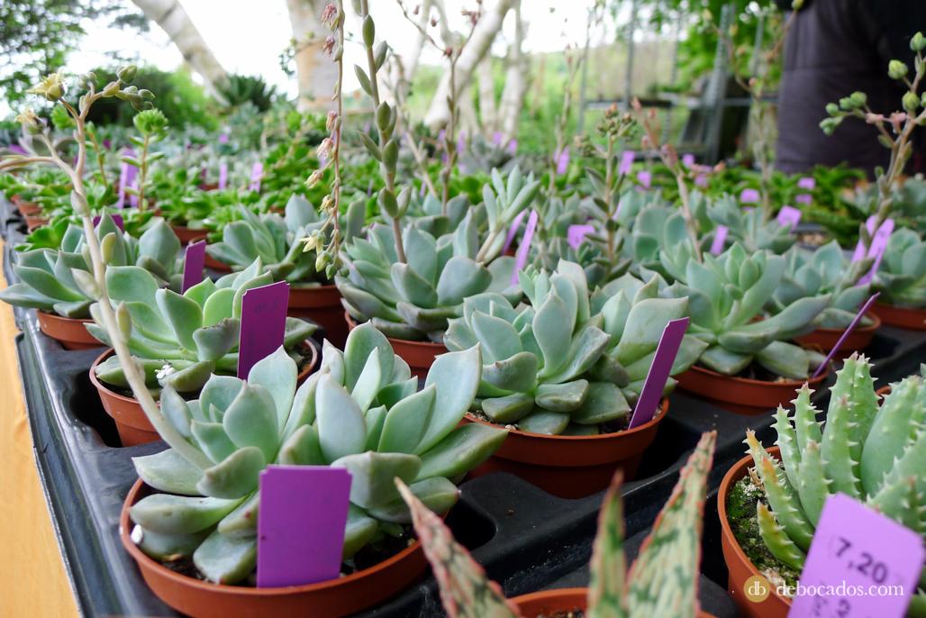 Poco a poco me he ido haciendo muy fan de este tipo de plantas.