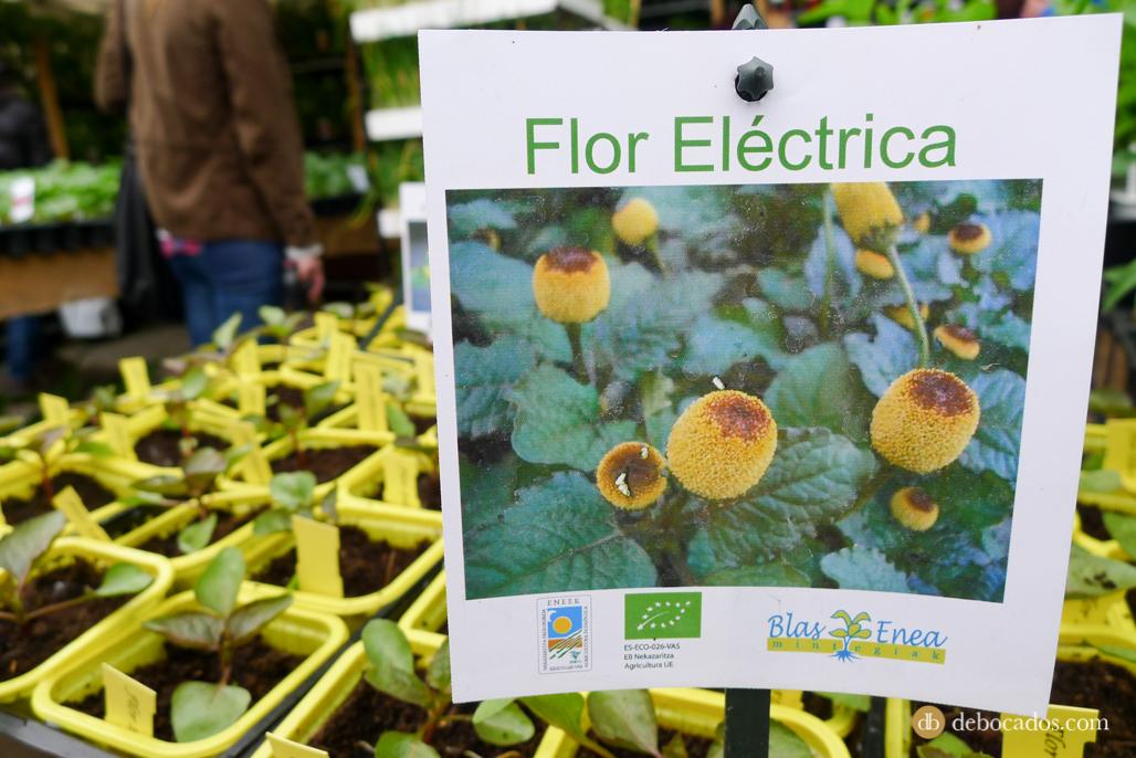 Flor eléctrica en la Feria de Plantas de Colección en Iturraran