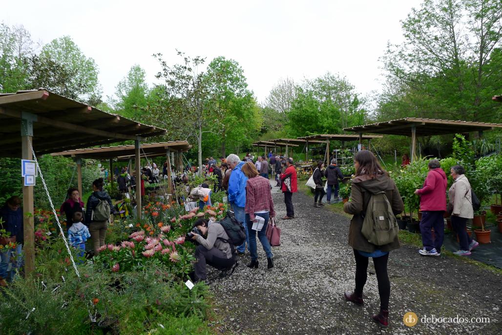 Puestos de plantas y flores en la Feria de Plantas de Colección en Iturraran