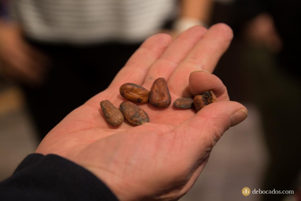 Chocolate en grano en la Chocolatería Museo Txokolateixia de Oñati