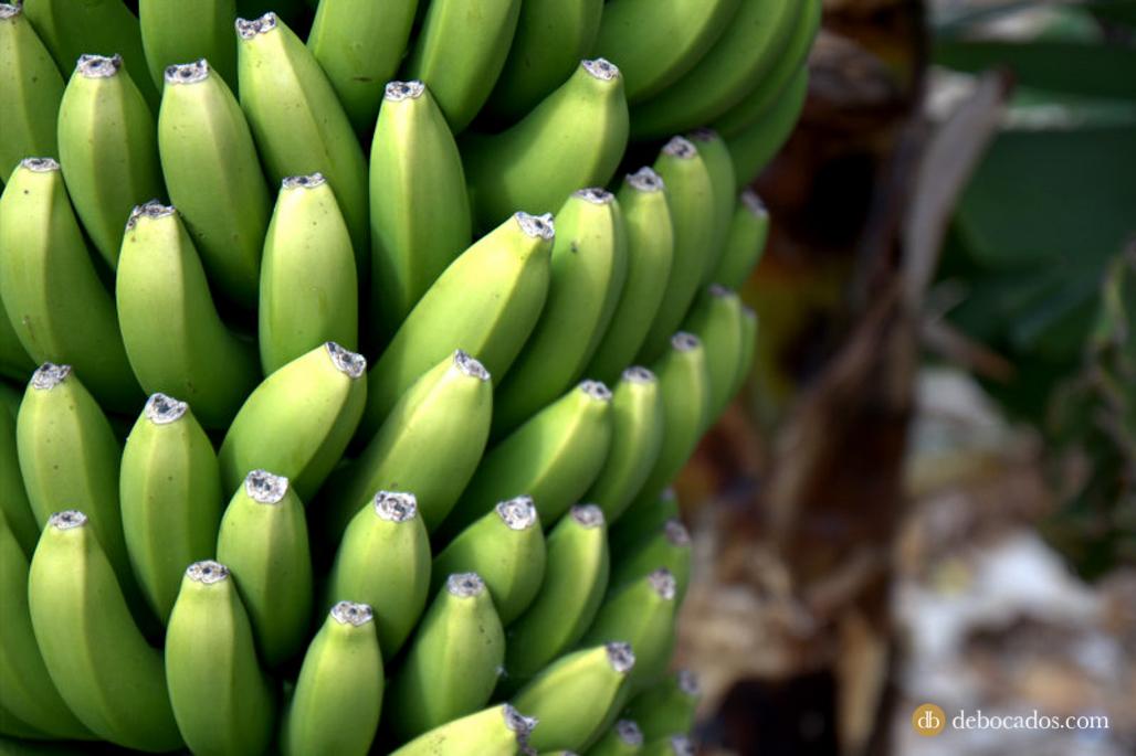 Plátano palmero, gastronomía La Palma